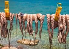 Séchage de poulpe sur une ligne images libres de droits