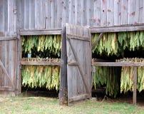 Séchage de tabac d'ombre dans la grange image libre de droits