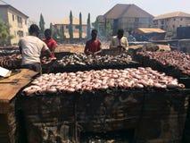 Séchage des poissons par le tabagisme photographie stock libre de droits