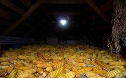 Séchage du maïs sur le vieux grenier sur la ferme photo stock