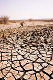 sécheresse Photo libre de droits