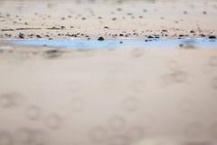 sécheresse Photos libres de droits