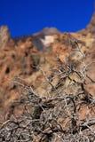 Sécheresse de volcan d'EL Teide Photographie stock