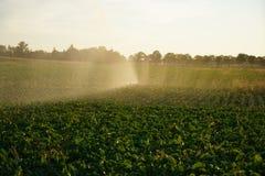Sécheresse durable en Allemagne photos stock