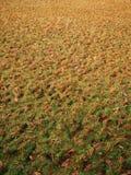 Sécheresse en photo indienne de plantation de riz Photos libres de droits