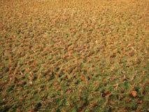 Sécheresse en photo indienne de plantation de riz Images libres de droits