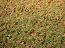 Sécheresse en photo indienne de plantation de riz Image libre de droits