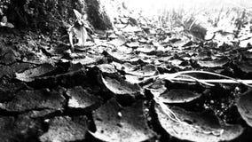 sécheresses Photos libres de droits