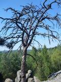 Séchez l'arbre sans feuilles sur un dessus d'une roche de grès Photos stock