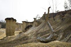 Séchez l'arbre tombé Photos libres de droits