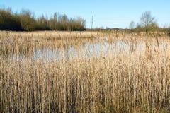 Séchez le champ d'herbe grand près d'un lac en premier ressort Images stock