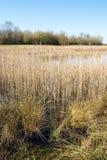 Séchez le champ d'herbe grand près d'un lac en premier ressort - verticale Images libres de droits