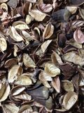 Séchez le fond de fleurs de feuilles Photographie stock libre de droits