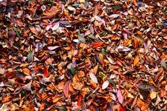 Séchez le fond de papier peint de natrue de feuilles Images stock