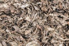Séchez le fond de texture de feuilles Photo libre de droits