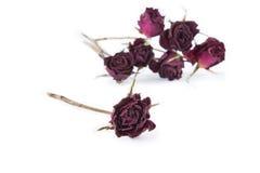 Séchez le fond rose et brouillé de roses sur le backgrou blanc Photo stock
