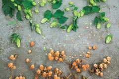 Séchez le houblon en cônes brun et les cônes verts frais de l'houblon sur le béton Photo stock