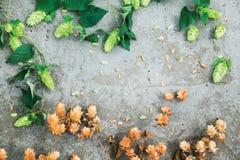 Séchez le houblon en cônes brun et les cônes verts frais de l'houblon sur le CCB concret Photographie stock libre de droits