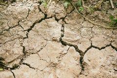 Séchez le sol aride qui est déshydraté en été ne cultive pas des cultures photo stock