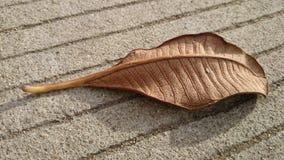 Séchez les feuilles Photographie stock