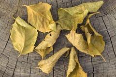 Séchez les feuilles Photos libres de droits