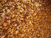 Séchez les feuilles Photos stock