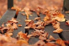 Séchez les feuilles Photo stock