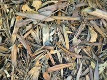 Séchez les feuilles Images stock