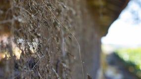 Séchez les feuilles accrochant sur la barrière de Chainlink photographie stock