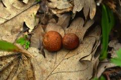 Séchez les feuilles avec des boules Photos libres de droits