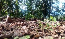 Séchez les feuilles des collines de darjeeling- Image libre de droits