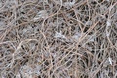 Séchez les feuilles et l'herbe Images stock