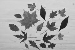 Séchez les feuilles placées au centre Concept d'art d'automne Collection de feuilles d'automne sur le fond en bois photographie stock libre de droits
