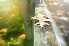 Séchez les feuilles sur la barrière en bois, style de vintage de fond d'automne Photo stock