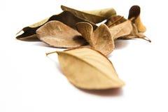 Séchez les feuilles sur le fond blanc Image stock