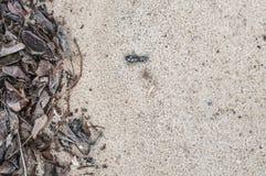 Séchez les feuilles sur le sable Image stock