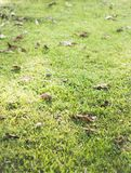 Séchez les feuilles sur un champ Images stock
