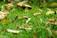 Séchez les feuilles sur une pelouse verte Photo libre de droits