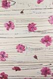 Séchez les fleurs roses de géranium sur un fond blanc Photos libres de droits