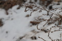 Séchez les herbes Photographie stock libre de droits