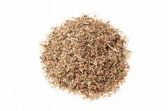 Séchez les herbes coupées du thym sur un fond blanc Image libre de droits