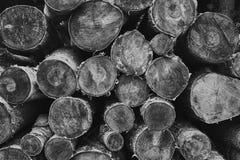 Séchez les rondins coupés de bouleau-arbre empilés sur l'un l'autre images libres de droits