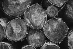 Séchez les rondins coupés de bouleau-arbre empilés sur l'un l'autre image stock