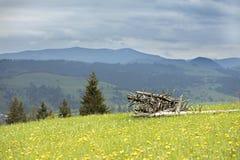 Séchez les vieux troncs d'arbre empilés sur l'herbe verte Image stock