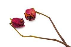 séchez rose Image stock