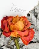 Séchez rose et les cendres Photos libres de droits