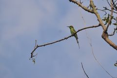 Séjour d'oiseau de poissons d'oiseau de poissons de crochet de martin-pêcheur de roche de poissons sur le fond de bleu de ciel d' photos stock