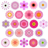 Sélection énorme de diverse Mandala Flowers Isolated concentrique sur le blanc Images stock