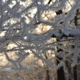 sélection d'hiver Image libre de droits