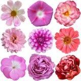 Sélection de diverses fleurs d'isolement photo stock